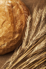 bread and wheat on canvas