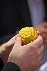 The man's hands hold a ritual fruit a citrus