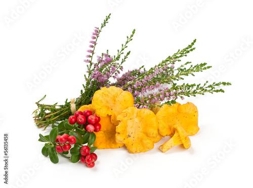 Leinwanddruck Bild chanterelles,heather and cowberrie over white