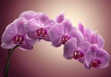 bouquet d'orchidées magenta