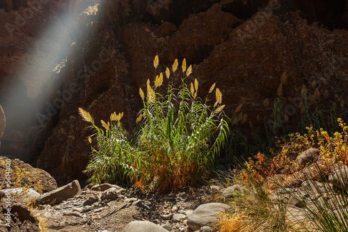 Leinwanddruck Bild Famous canyon Masca at Tenerife - Canary