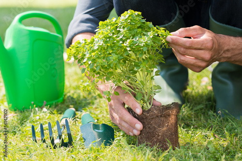 Closeup Of Man'Planting Plant