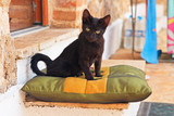 Playful curious black street kitten on pillow outdoors. Corfu. G