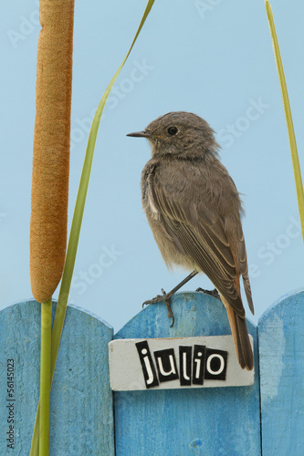 Bird perched on a July decorated fence