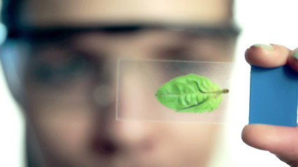 Female scientist looking at plant leaf in glass slide