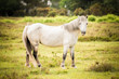 british new forest pony surrounded by autumnal foliage