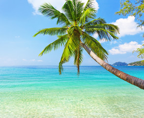 sea and coconut palm