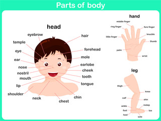 Parts of body