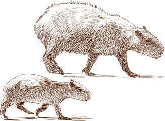 capybara with a cub
