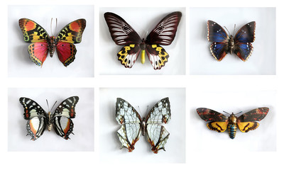 Set of beautiful giant butterflys
