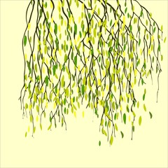 Spring background with green leaf, birch branches.