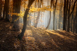 colorful forest in autumn with sun rays