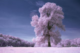infrared landscape with old tree