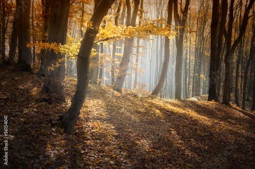 kolorowy-las-jesienia-z-promieni-slonecznych
