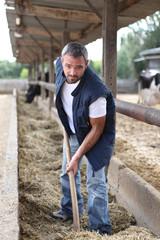 farmer spreding, straw
