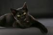 canvas print picture - Schwarze Katze - black cat witch craft