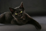 Schwarze Katze - black cat witch craft - Fine Art prints