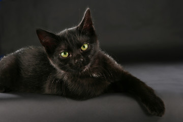 Schwarze Katze - black cat witch craft