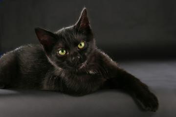 Schwarze Katze - black cat witch craft