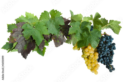 frame with grapes