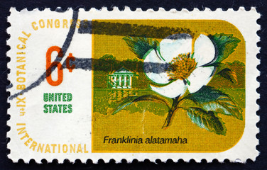 Postage stamp USA 1969 Franklin Tree, Plant