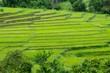 Terrace field plantation