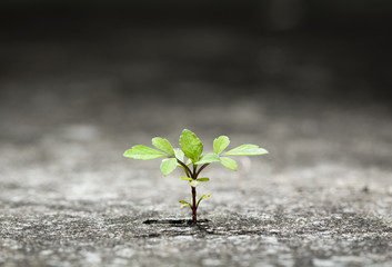 New plant germinate from the crack concrete of survival