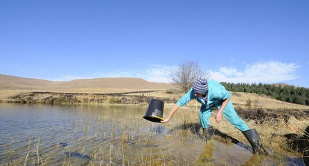 Stocking trout into a dam, Midlands, kwazulu Natal