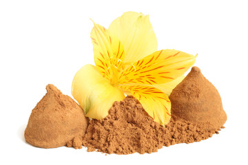 Cacao powder and  chocolate sweets with flower of alstroemeria