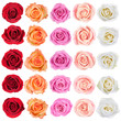 canvas print picture - Collection of roses.
