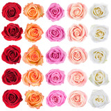 Collection of roses.