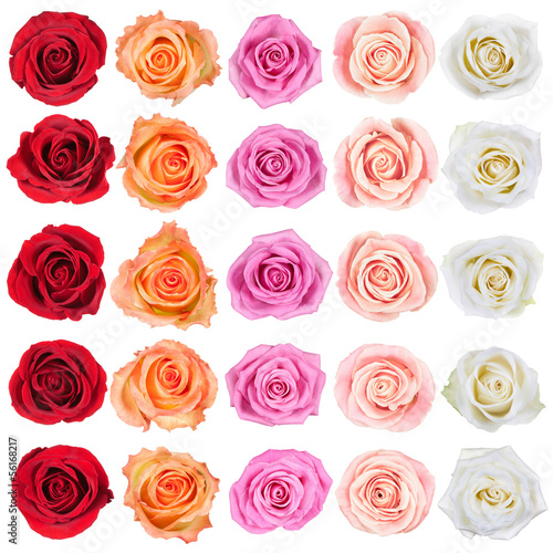canvas print picture Collection of roses.