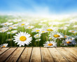 field of daisy flowers and wood floor