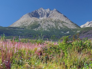 Gerlach Peak and colorful plants