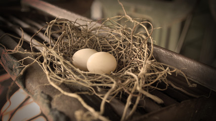 bird egg in nest