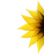 Sunflower part. Vector
