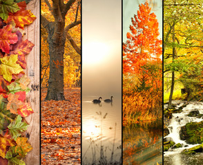 bunte Herbst-Collage