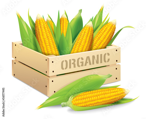 Corn box vector illustration isolated on white background.