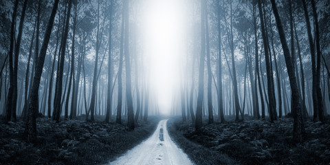 Scary Misty Road in the Forest