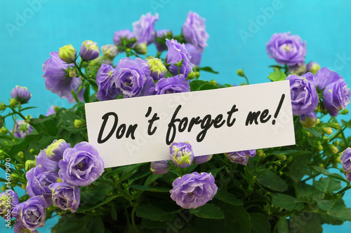 Don't forget me card with purple campanula flowers