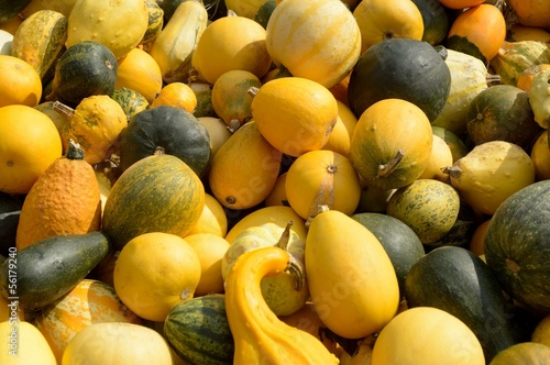 decorative gourd yellow green