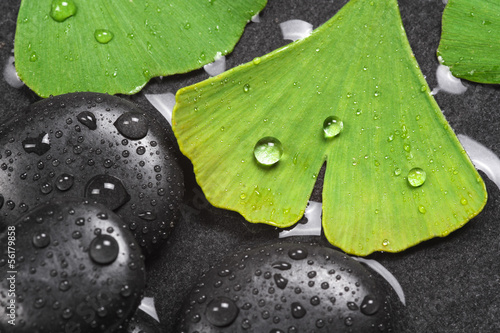 Ginkgo leaves, medical plant © Marina Lohrbach