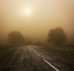 Autumn Landscape with Trees and Road in Fog