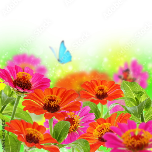 Blue butterfly on colorful flowers.