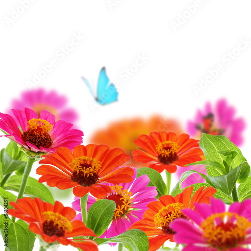 Bouquet of zinnia and blue butterfly.