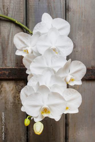 Branch of blooming white orchid flowers © agneskantaruk