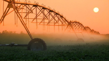 Crop Irrigation at Sunset
