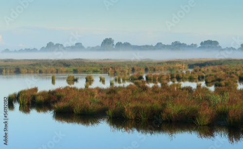 Fog above a swamp.