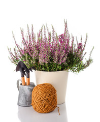 Heather flowers in a pot and garden tools. Concept of gardening