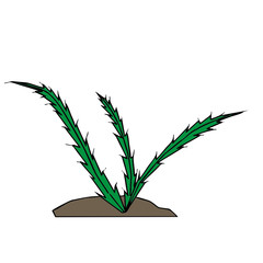 vector drawing of a cactus